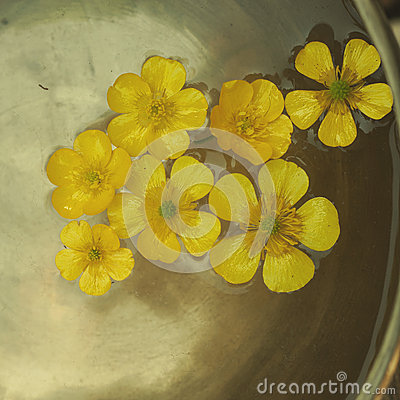Free Buttercup Floating Royalty Free Stock Images - 59042859