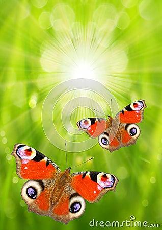 The Butterflies.