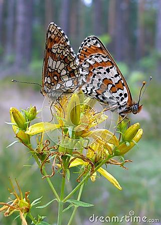 Free Butterflies Stock Photos - 26876033
