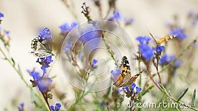 Butterflies fladder över blå blommor