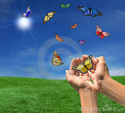 Butterflies Flying Outdoors Towards the Sun