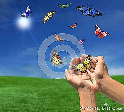 Butterflies Flying Outdoors Towards the Sun