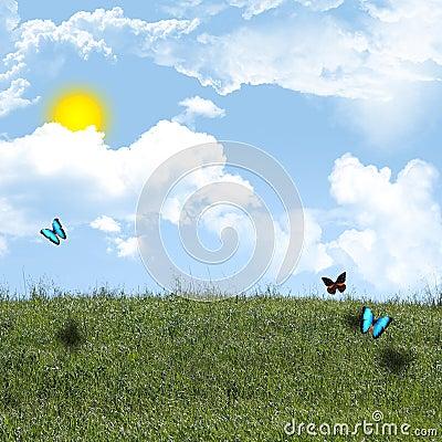 Butterflies on hill