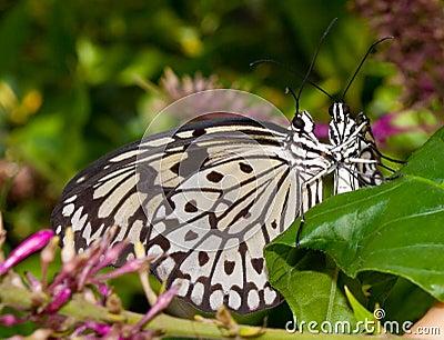 Butterflies Hug