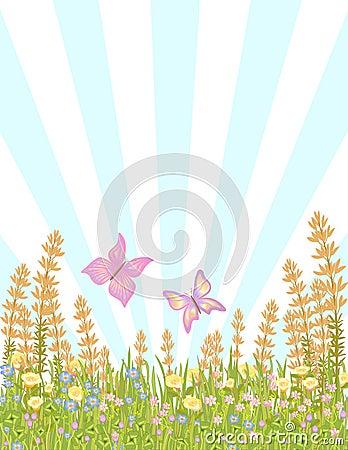 Butterflies in meadow flowers