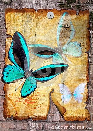 Butterflies on old vellum