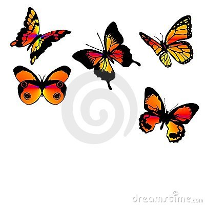Butterflies orange