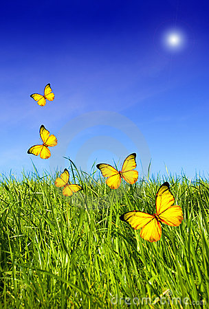 Free Butterflies Over Grass Royalty Free Stock Image - 2438576