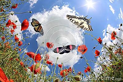 Butterflies at springtime