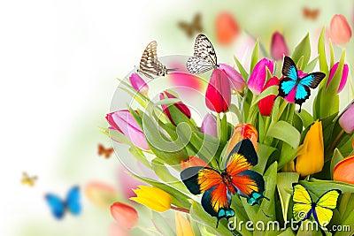 Butterflies on tulips