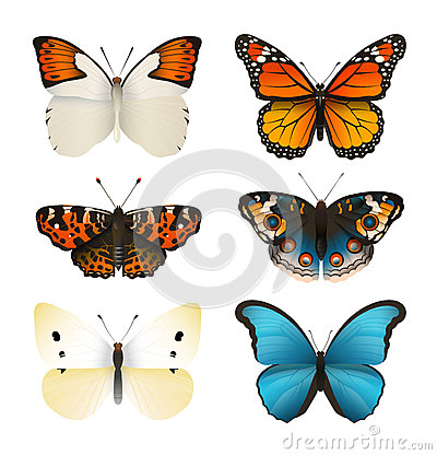 Free Butterflies Vector Set. Colorful Flat Butterfly. Realistic Color Gradient. Stock Photos - 71025393