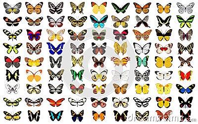 Butterfly Cartoon Illustration