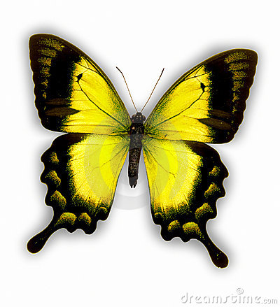 Free Butterfly Stock Photos - 12339233