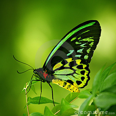 Free Butterfly Royalty Free Stock Images - 14503289