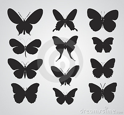 Free Butterfly Royalty Free Stock Photo - 14849865