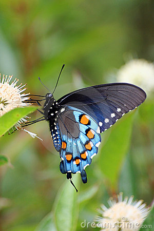 Free Butterfly Stock Photos - 173653