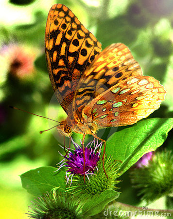 Free Butterfly Stock Photo - 2153200