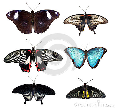 Free Butterfly Royalty Free Stock Image - 25932206