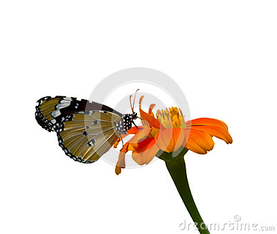 Butterfly Stock Photo - Image: 26628210
