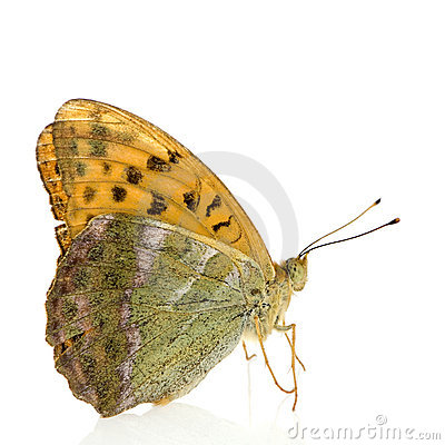 Free Butterfly Stock Image - 3081251