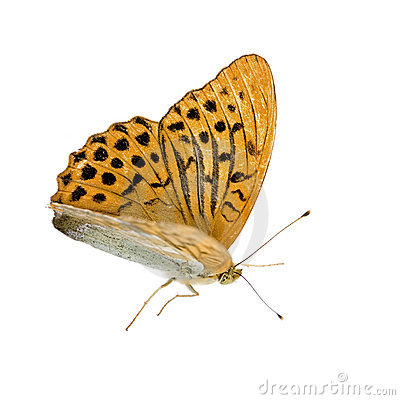 Free Butterfly Stock Photos - 3081253