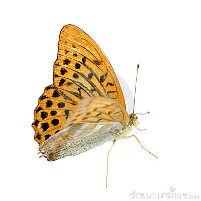 Free Butterfly Royalty Free Stock Photos - 3081268