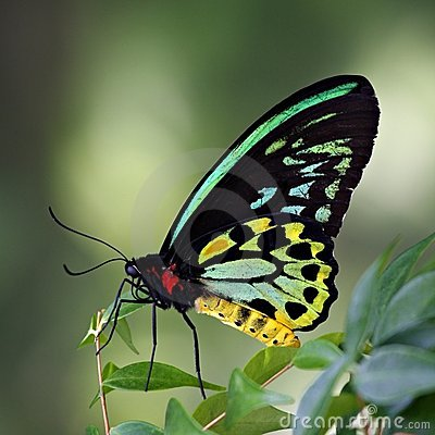 Free Butterfly Stock Image - 3955951