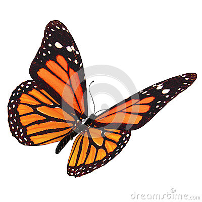 Free Butterfly Stock Images - 47855784
