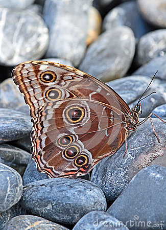 Free Butterfly Royalty Free Stock Images - 49002459