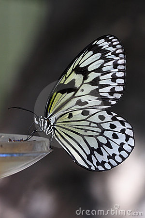 Free Butterfly Stock Images - 5852224