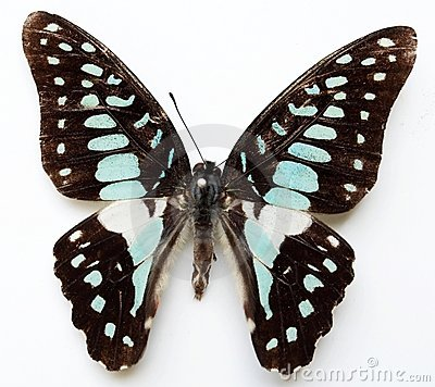 Free Butterfly Royalty Free Stock Image - 5874296