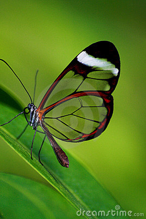 Free Butterfly Stock Image - 5956271