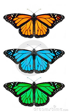 Free Butterfly Royalty Free Stock Image - 7018236
