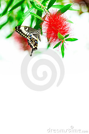 Free Butterfly Royalty Free Stock Photos - 8384338