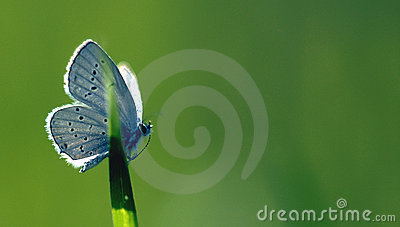 Butterfly green background beauty in nature