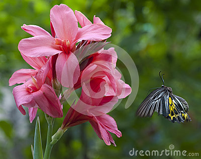 Butterfly aim