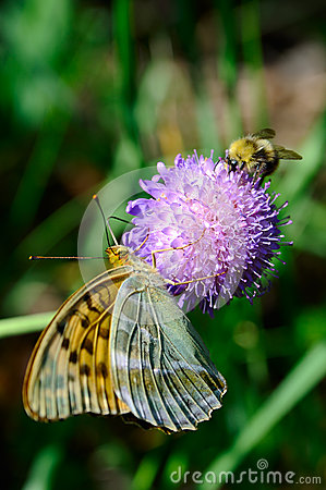Free Butterfly And Bumble Bee Stock Photo - 42393950