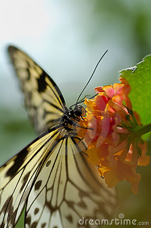 Free Butterfly And Flower Stock Photography - 5500552