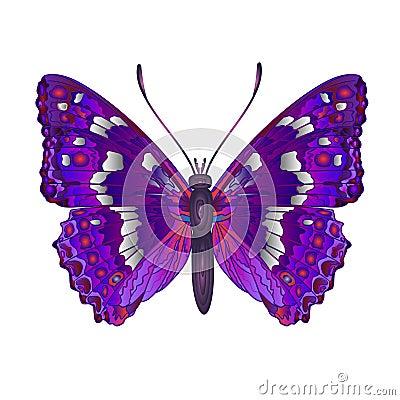 Butterfly Apatura iris vector Vector Illustration