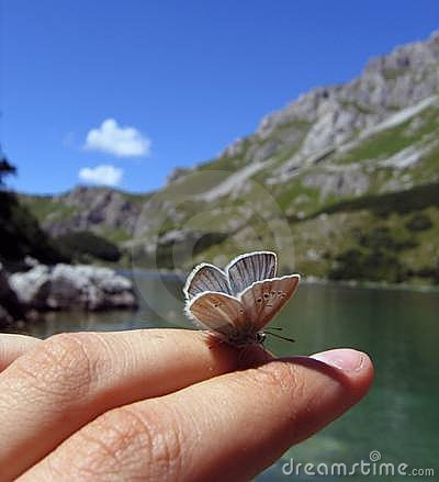 Free Butterfly At The Finger Royalty Free Stock Photo - 241375