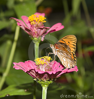 Free Butterfly At The Flower Stock Photo - 2183680