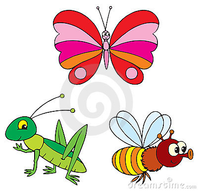 Butterfly, bee and grasshopper