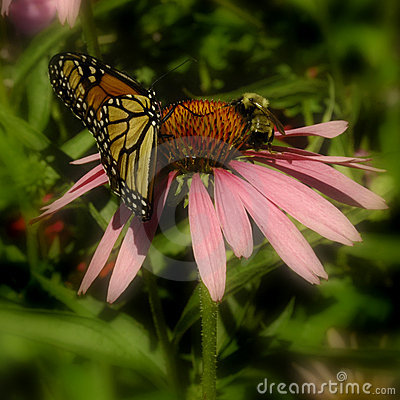 Butterfly & Bee on Pink Flower