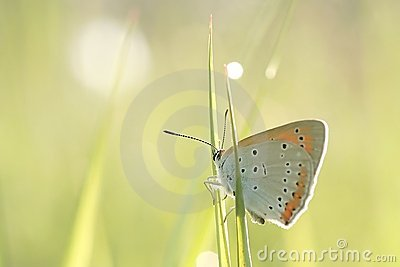 Butterfly on a blade of grass in spring