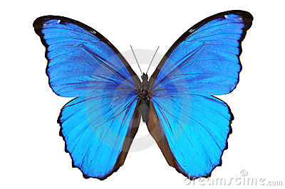 Butterfly in blue tones