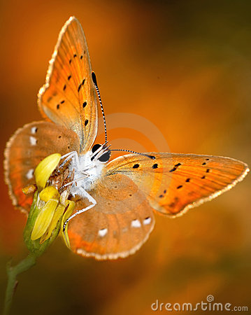 Butterfly with bright wings