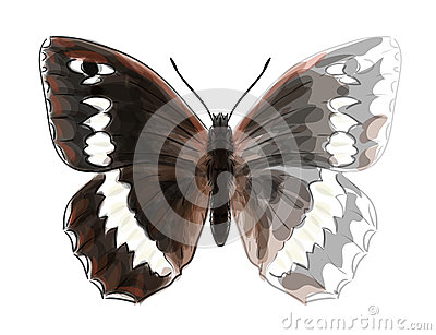 Butterfly Brintesia Circe.
