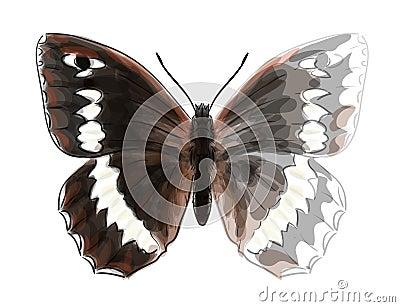 Butterfly Brintesia Circe.