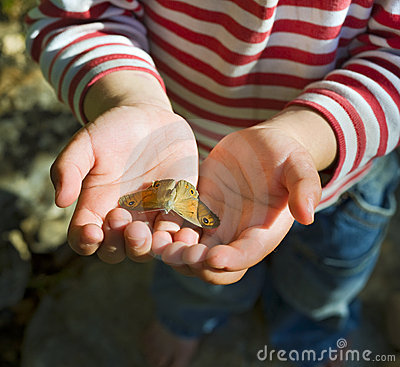 Butterfly in child hands