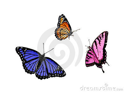 Butterfly collection (3 for 1)